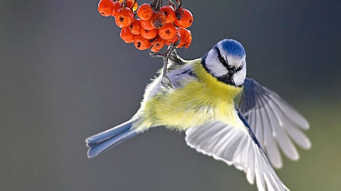 Resultaten Nationale Tuinvogeltelling Krimpen 2018