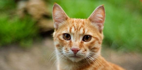 Waarschuwing: Kattenhaters actief in de Doornenbuurt?
